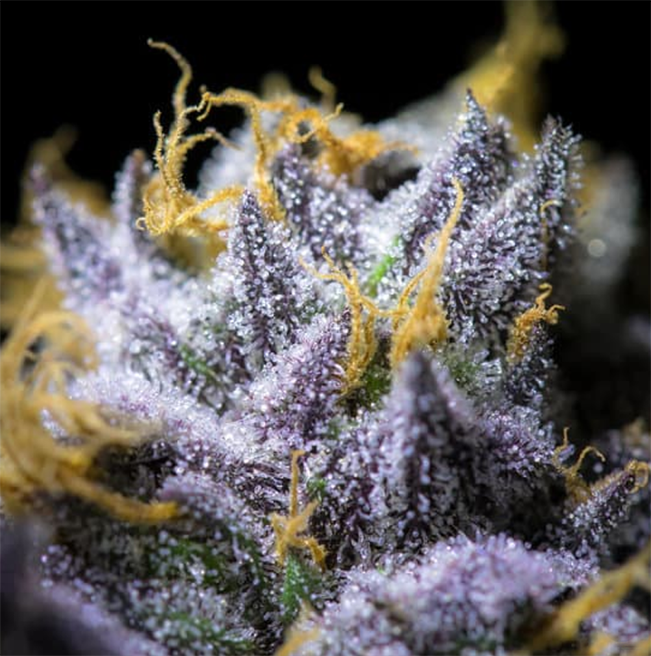 Marijuana-Dispensary-Delivery-Service-Roseville.